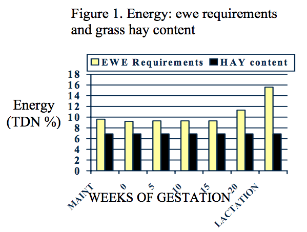 Ewe energy requirements increase to nearly 16 TDN during lactation, while the energy content of hay grass stays the same at around 7 %.