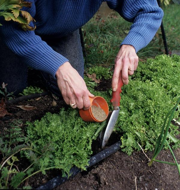 Get This Report about Organic Fertilizer- Growing Tips Article
