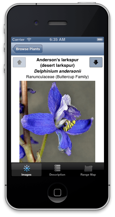 OSU app brings wildflower identification to your fingertips | OSU