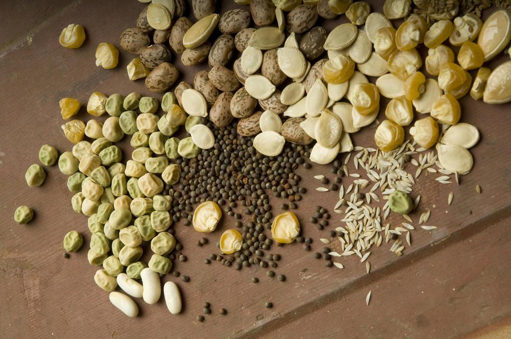 Save Money By Starting Vegetable Seeds At Home Osu Extension Service
