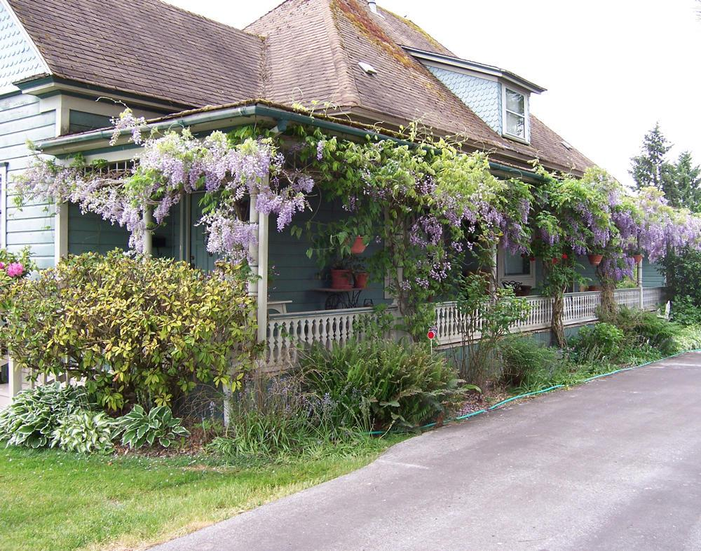Wisteria Care Get Out Your Clippers Twice A Year And Go To Town