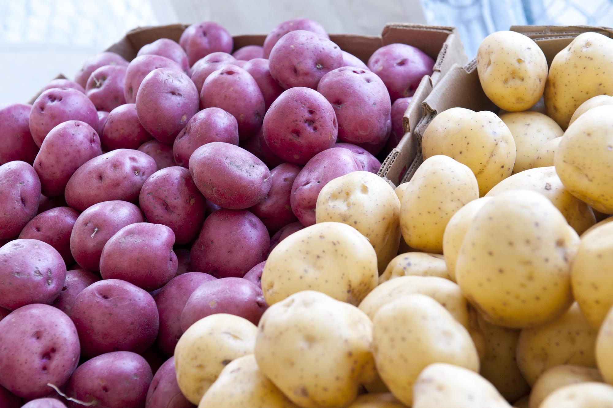 100 Pcs Potato Seeds Fresh Vegetable Seeds Home Garden Plants Nutritious Fast
