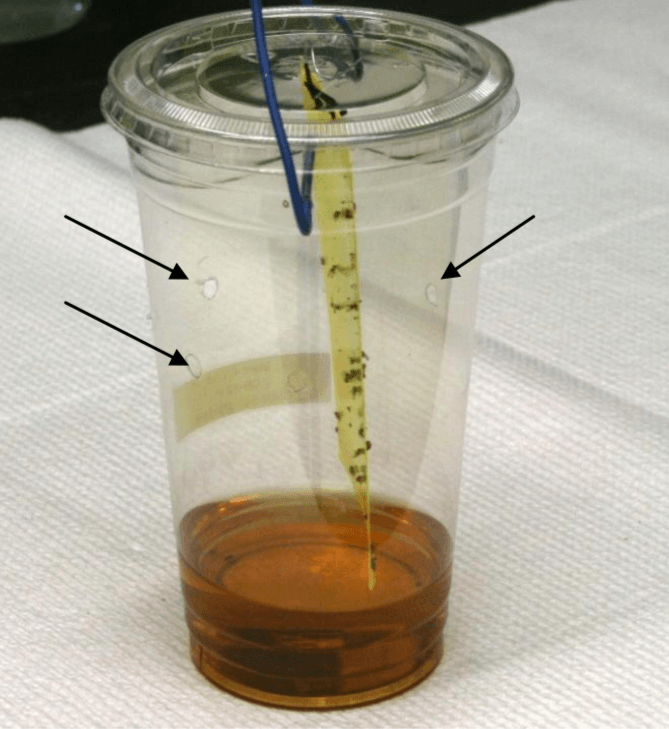 Spotted Wing Drosophila Traps – Monitoring Adult Flight