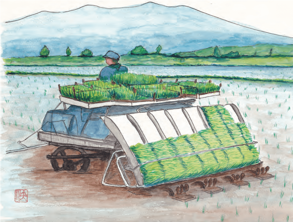 Figure 5. Modern multi row riding rice transplanter (first prototype invented by Ikuo Yamakage in 1986).
