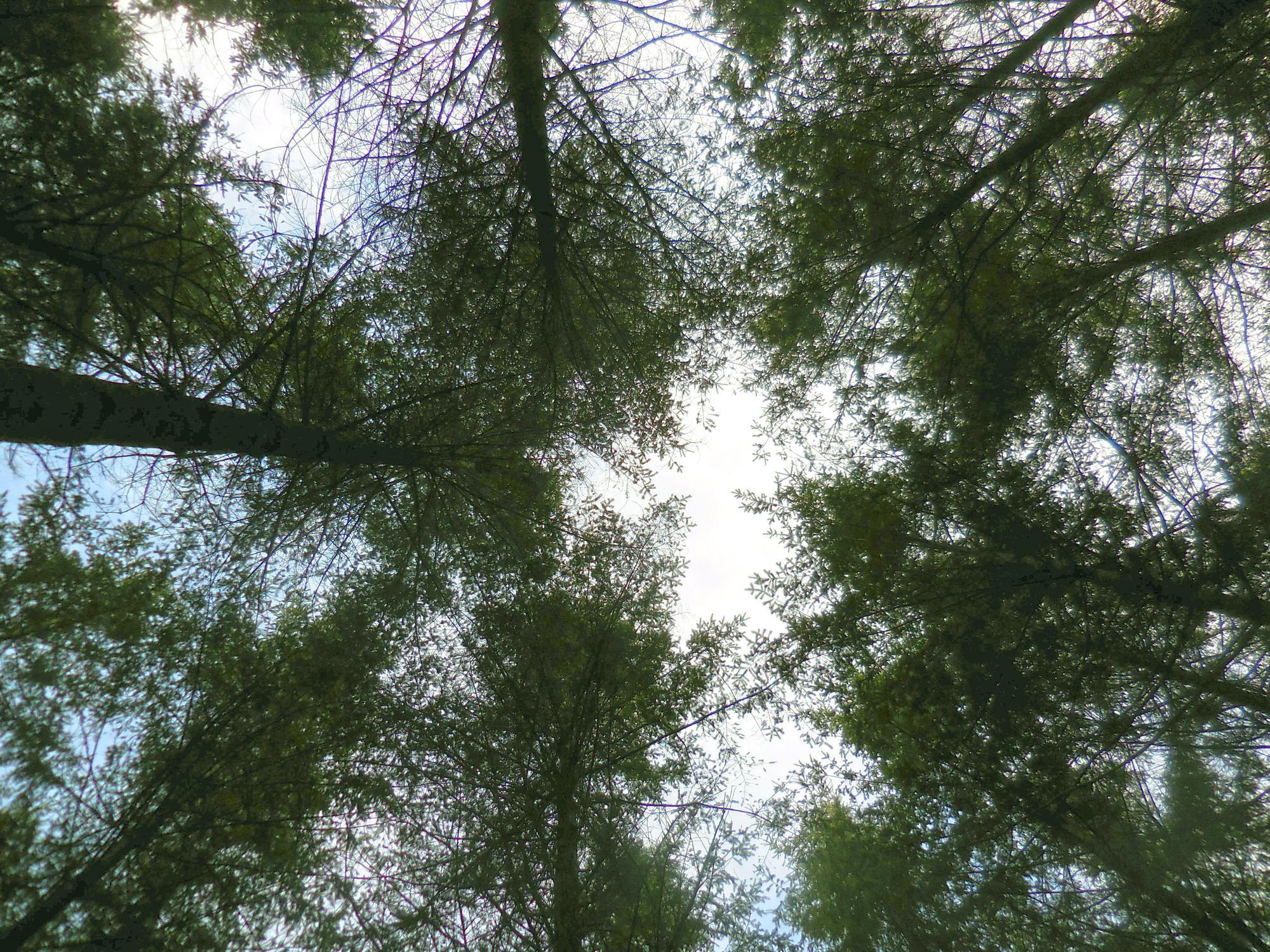 Diagnosis table — Douglas-fir, oak and pine | OSU Extension