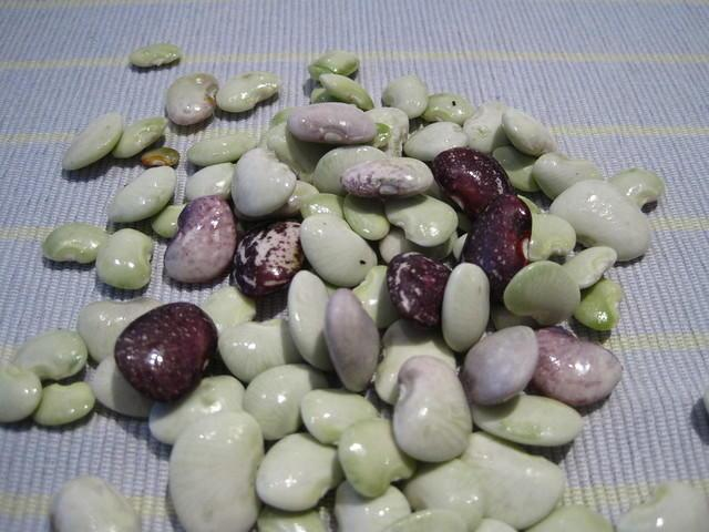 variety of lima beans