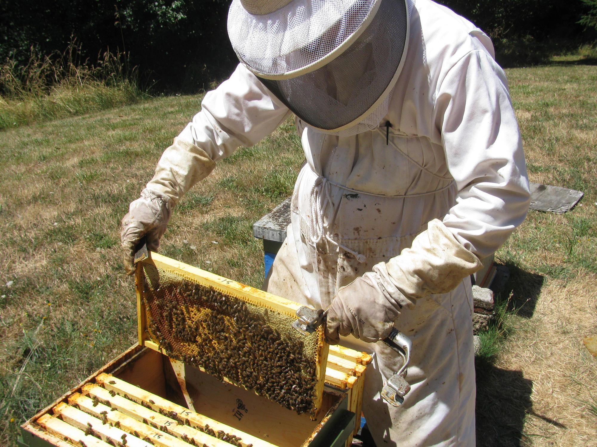 Oregon Master Beekeeper Program Osu Extension Service