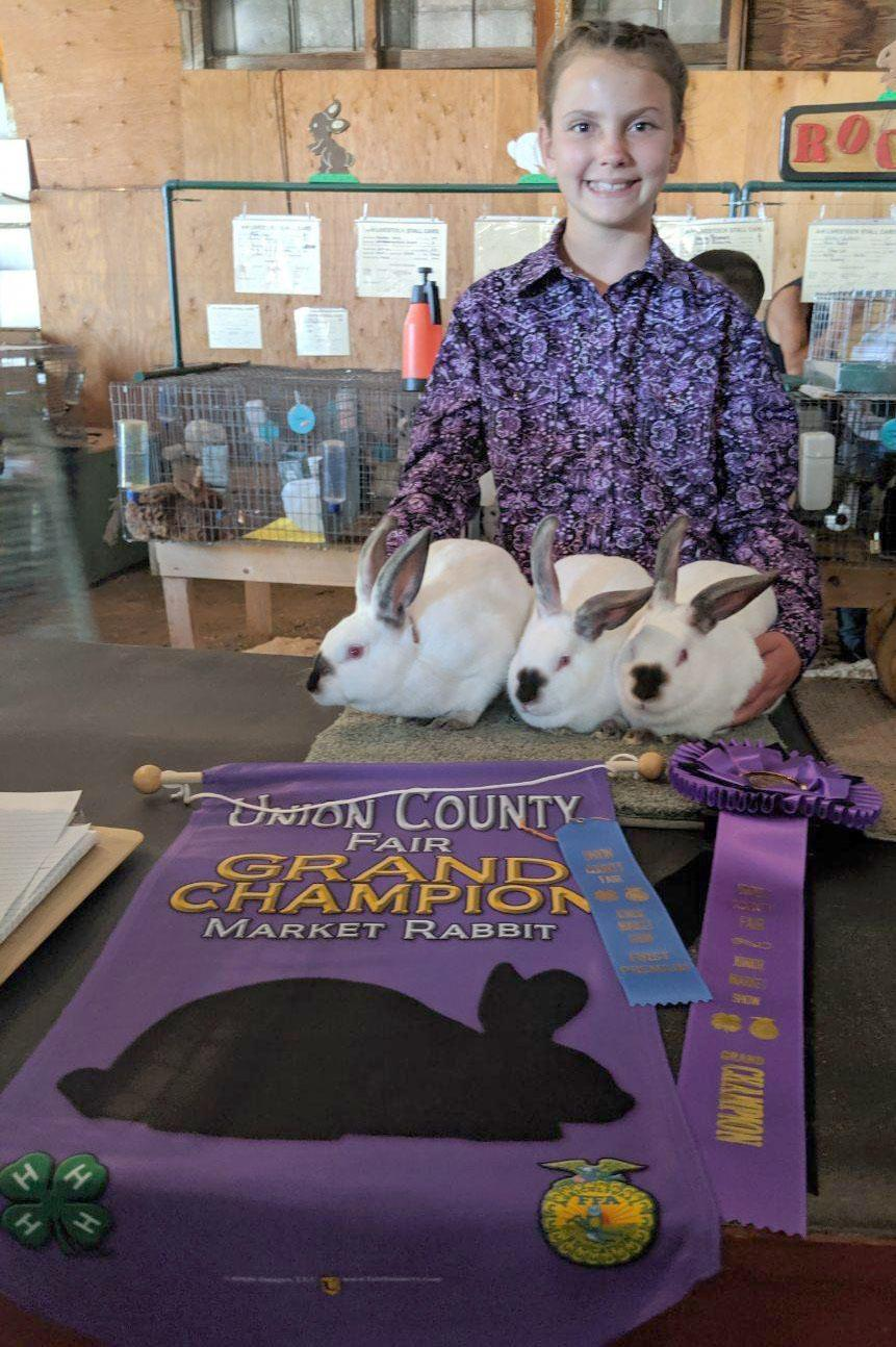 Champion Market Rabbit 2019