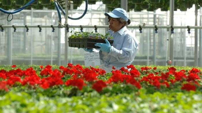 person carrying flowers in a nursery setting