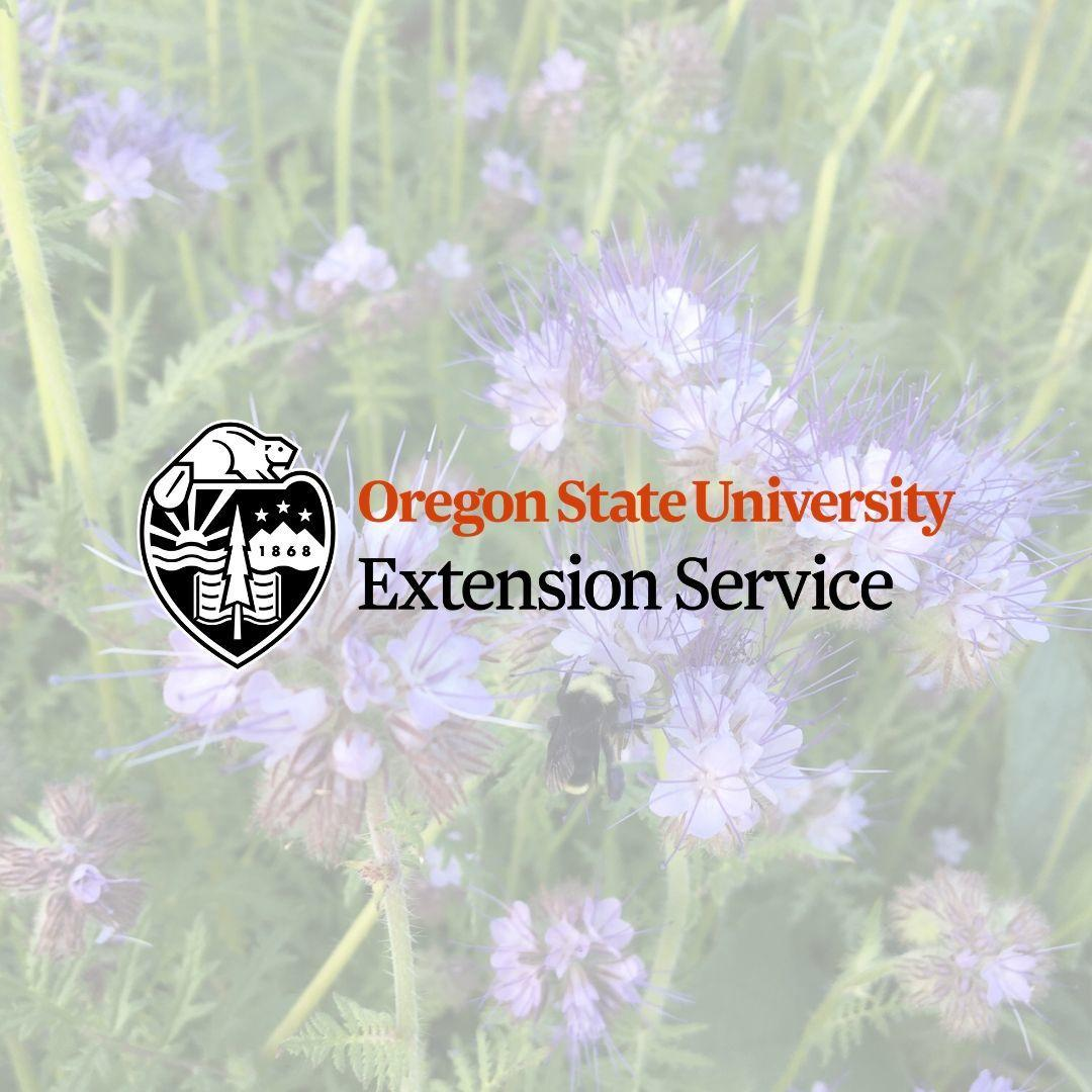 OSU Extension logo overlayed on photo of phacelia with a bumble bee