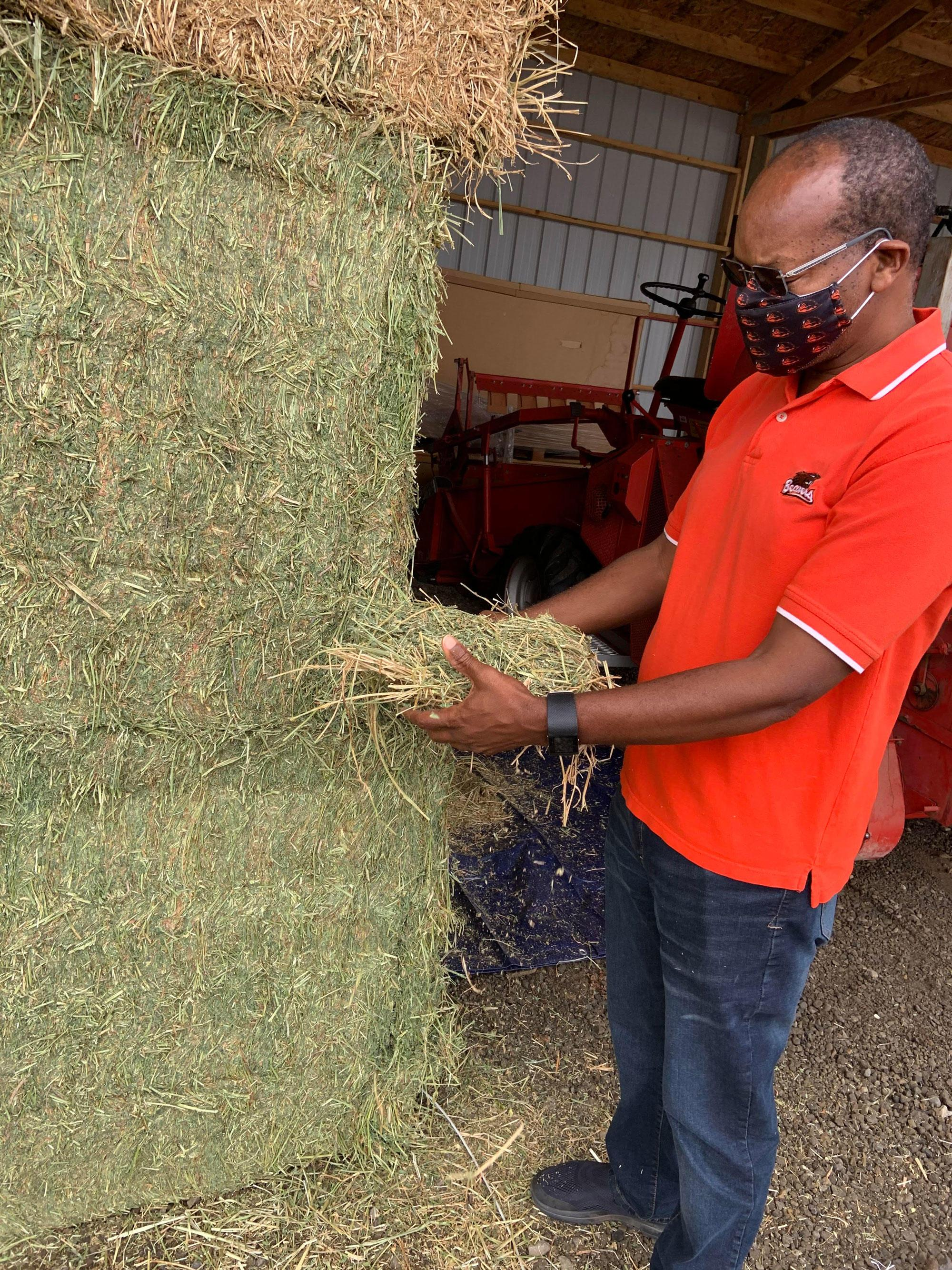 Sam Angima, associate dean for Extension in the OSU College of Agricultural Sciences, inspects donated hay for quality.