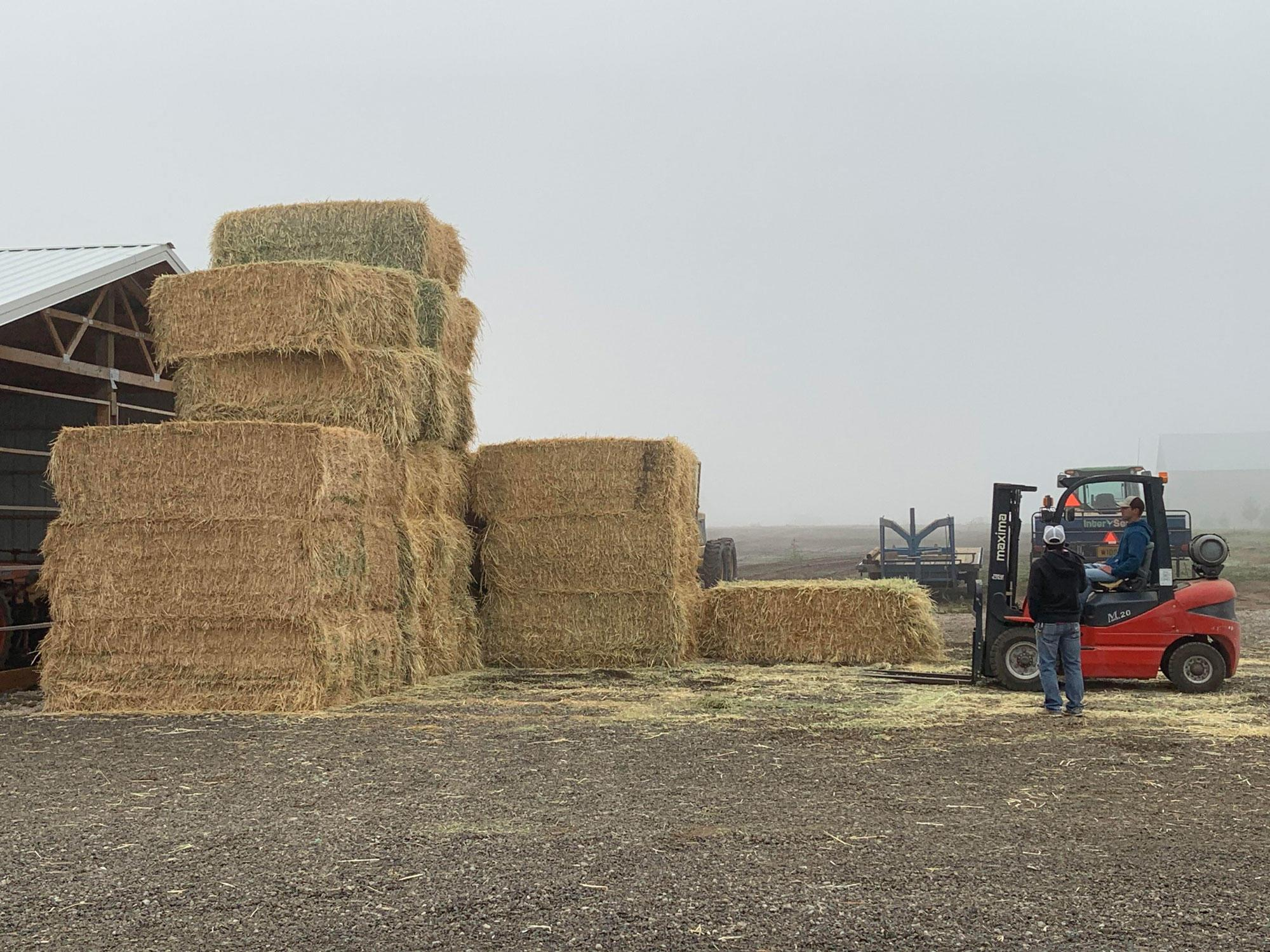 Donated hay stacked at the North Willamette Research and Extension Center.