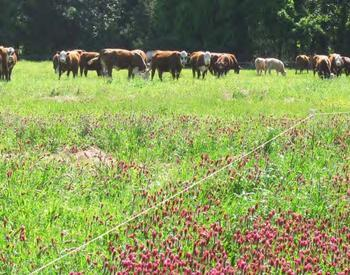 Browse Pasture and Forages Resources | OSU Extension Service