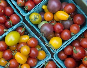 Different color tomatoes in bins