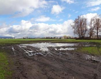 small pooling of water on soil in field with blue sky and trees in distance