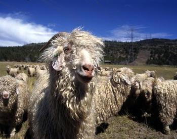 Goat Resources for Small Farms | OSU Extension Service