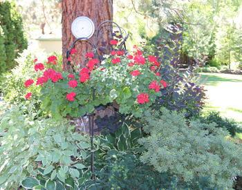 Flower pot with red flowers hanging over a bush