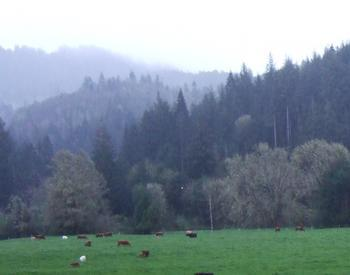 Pasture with cows spread throughout