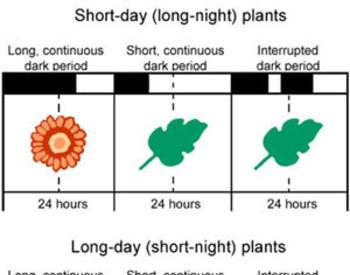 Environmental Factors Affecting Plant Growth | OSU Extension Service