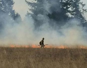 Fire fighter walking the line of fire burning on edge of forest and field