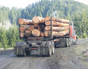 Cutting and Selling Trees | OSU Extension Service