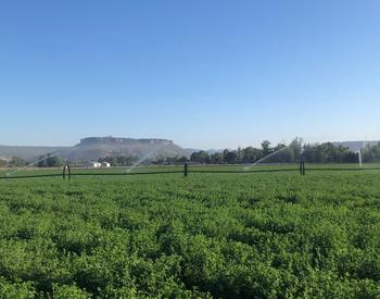 Irrigated alfalfa field with Table Rock in the background