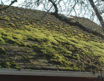 Moss on roofs