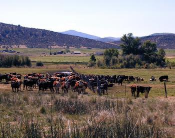 Fenceline separating two groups of cattle