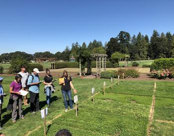 Multiple people at the OSU Turfgrass Research Farm observing eco lawn research plots