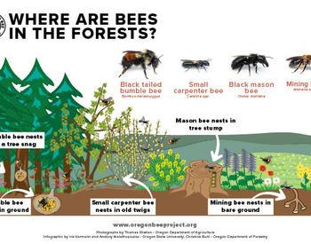 Where are bees in managed forests