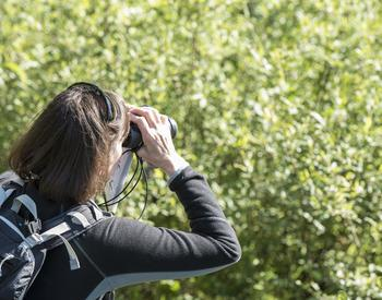 Person watching birds with binoculars