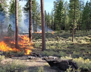 Prescribed burns are an important part of wildfire management
