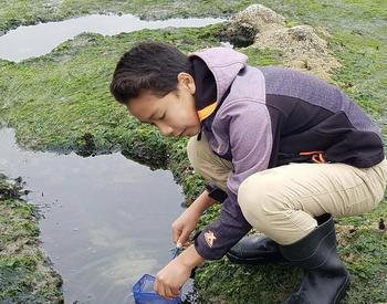 Student kneels by creek to gather sample with net
