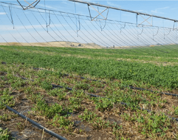 Mobile drip irrigation in an alfalfa field