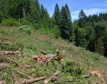 Clear cut from last summer's harvest at Hopkins that will need to be reforested