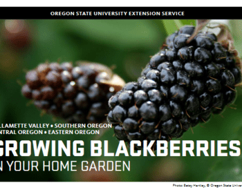 "Cover photo for ""Growing Blackberries in Your Home Garden"""