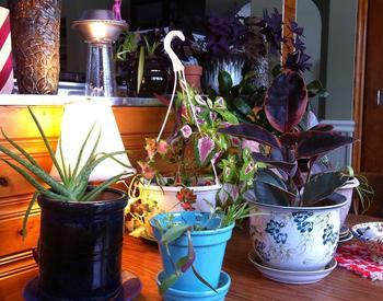 Variety of houseplants on a table