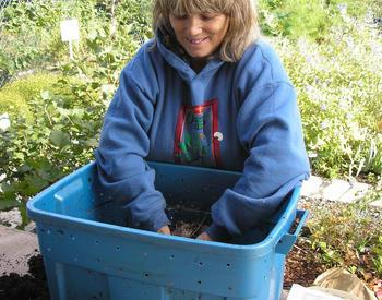 Master gardener using a worm compost bin