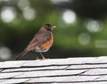 robin standing on rooftop