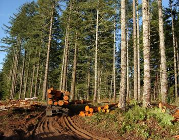stand of trees with logging road and truck