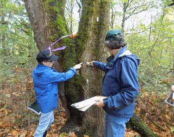 Two people examining a tree