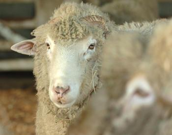 Sheep Resources for Small Farms | OSU Extension Service