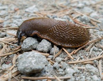 slug (photo by Alan Denis)