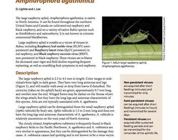 Wet weather invited crane flies to invade lawns | OSU Extension Service