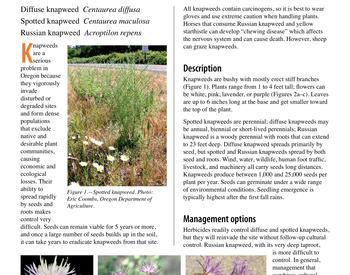 Bidding farewell to the dreaded bindweed | OSU Extension Service
